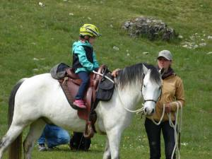 Pferdesegnung 08