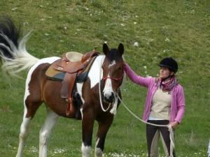 Pferdesegnung 09