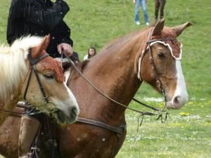 Pferdesegnung 11