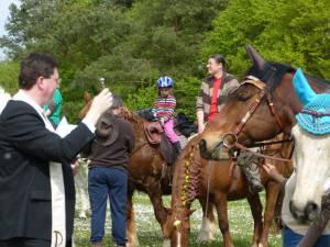Pferdesegnung 16