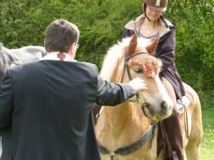 Pferdesegnung 21
