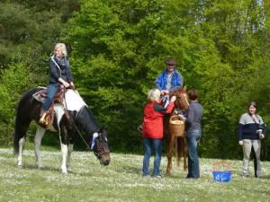Pferdesegnung 24
