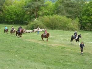 Pferdesegnung 39