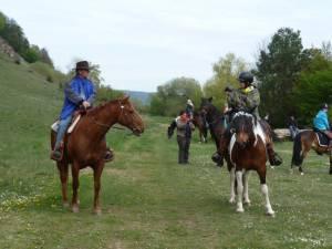 Pferdesegnung 44