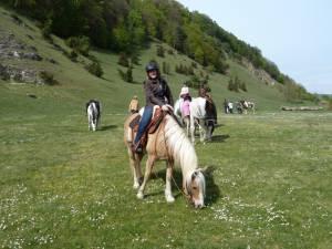 Pferdesegnung 92