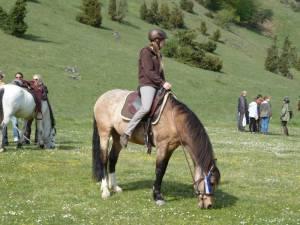 Pferdesegnung 95