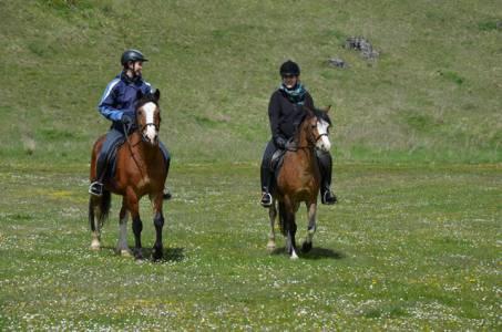 2017-04-23 Pferdesegnung  (14)