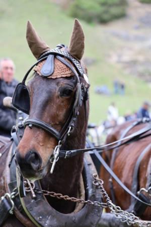 28.04.2019 Pferdesegnung An Den Mauerner  Höhlen (10)
