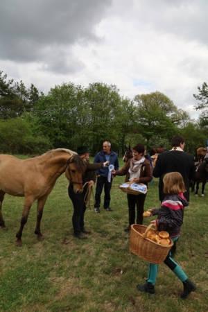 28.04.2019 Pferdesegnung An Den Mauerner  Höhlen (12)