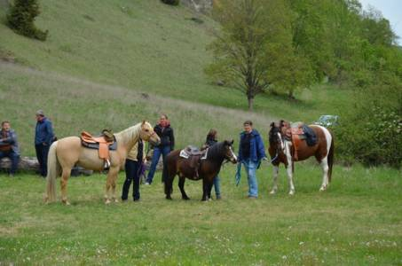 28.04.2019 Pferdesegnung An Den Mauerner  Höhlen (26)