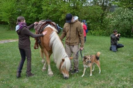 28.04.2019 Pferdesegnung An Den Mauerner  Höhlen (31)