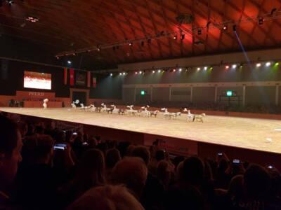 29.02 Pferd Bodensee 1 (11)