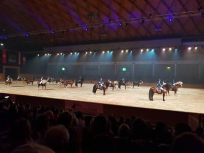29.02 Pferd Bodensee 1 (2)