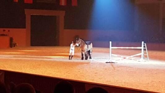 29.02 Pferd Bodensee 1 (3)