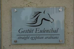 Gestuet Eulenthal Am 13.06 (15)