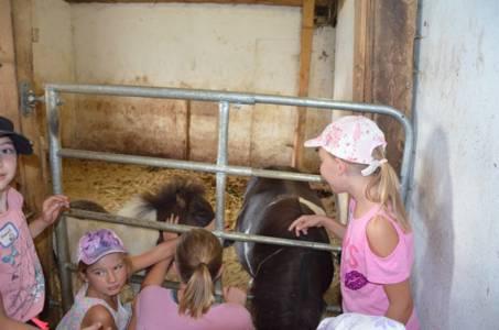Kids-Zeltlager Der PSG Auf Dem Haflinger Hof In Landershofen (35)