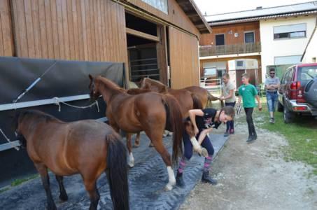 Kids-Zeltlager Der PSG Auf Dem Haflinger Hof In Landershofen (36)