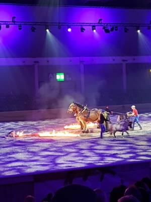 Pferd Bodensee 17.02 (10)