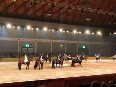 Pferd Bodensee 17.02 (12)