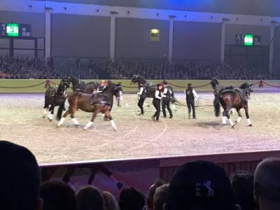 Pferd Bodensee 17.02 (13)