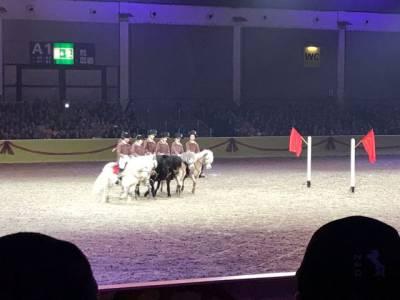 Pferd Bodensee 17.02 (14)