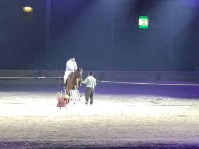 Pferd Bodensee 17.02 (16)