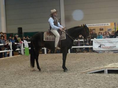 Pferd Bodensee 17.02 (18)
