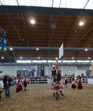 Pferd Bodensee 17.02 (19)