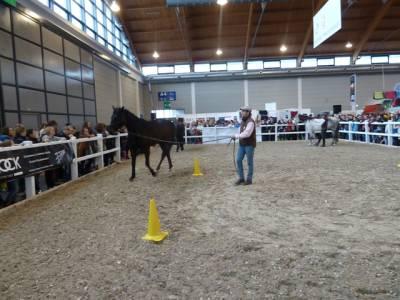 Pferd Bodensee 17.02 (20)