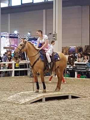 Pferd Bodensee 17.02 (5)