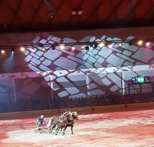 Pferd Bodensee 17.02 (8)