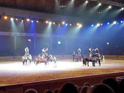 Pferd Bodensee 17.02 (9)