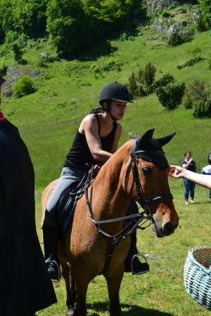 Pferdesegnung 22.05.16  (21)