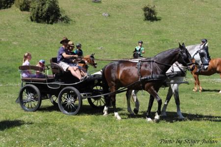 Pferdesegnung Am 29.04 (11)