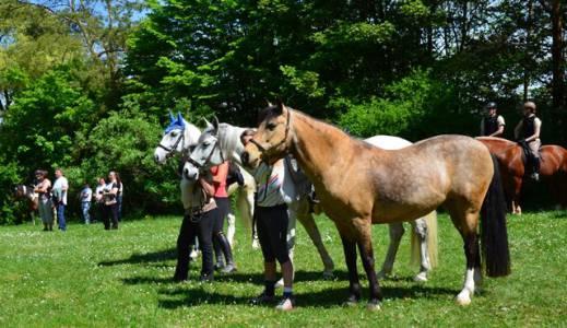 Pferdesegnung Am 29.04 (30)
