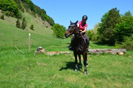 Pferdesegnung Am 29.04 (36)