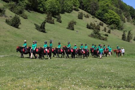Pferdesegnung Am 29.04 (3)