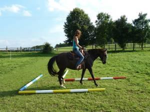 Horsemanship 12