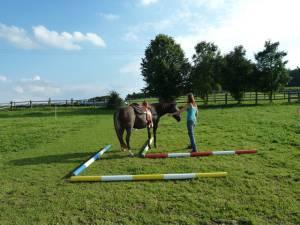 Horsemanship 14
