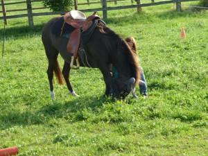 Horsemanship 15