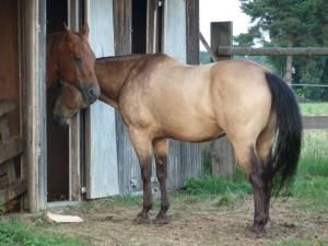 Horsemanship 22
