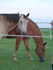 Horsemanship 26