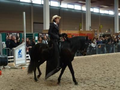 Pferd Bodensee 2016 02