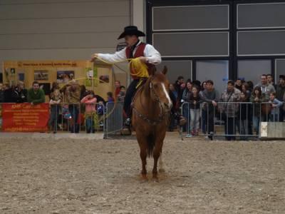 Pferd Bodensee 2016 08