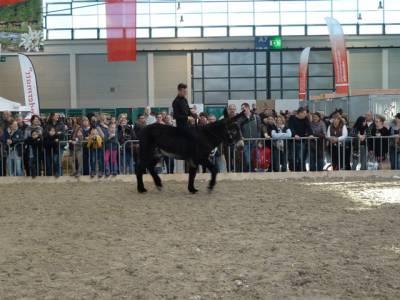 Pferd Bodensee 2016 12