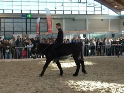 Pferd Bodensee 2016 13