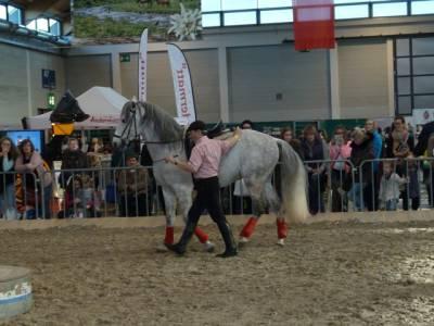 Pferd Bodensee 2016 14
