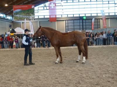 Pferd Bodensee 2016 17