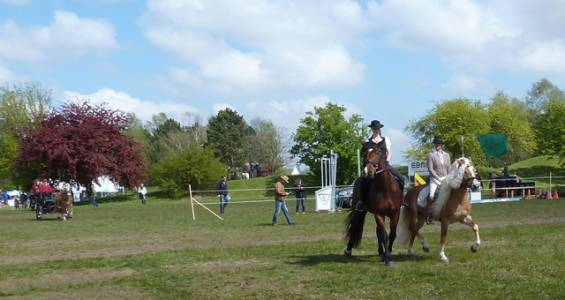 Pferd International 03