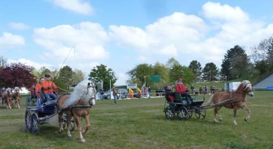Pferd International 04